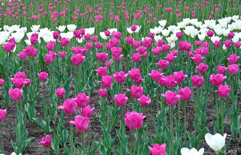 Сиреневый сад на Щелковском