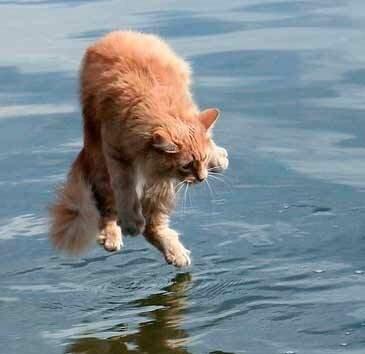 Чего боятся кошки