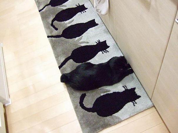 За неимением собаки сойдет и коврик с нарисованными котами.