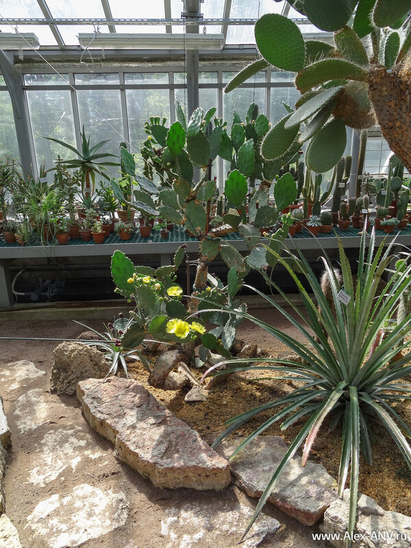Многие растения не высажены в грунт, а растут в горшках.