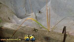 пауки в теплице