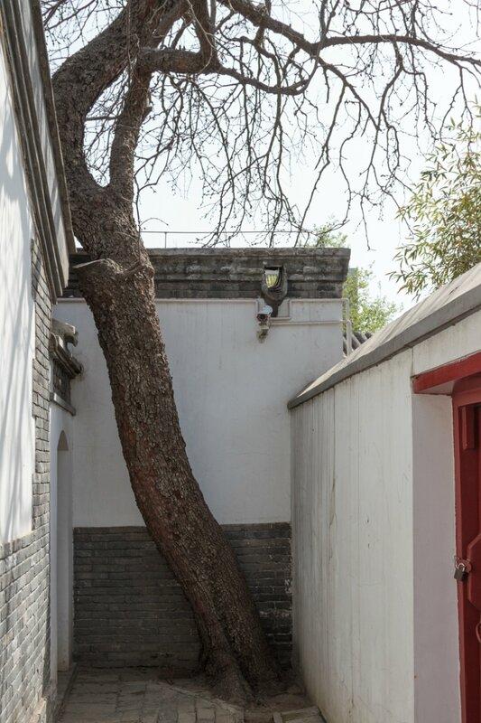Дерево, музей Лу Синя, Пекин