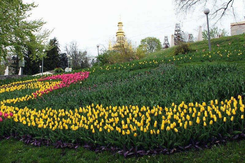 Выставка тюльпанов 2014 на Певческом поле
