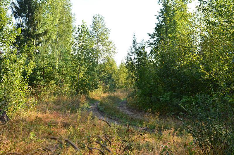 леса 19.jpg