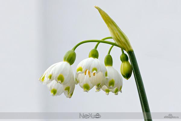 Я люблю все цветы, выпуск #91 | Разные цветы.