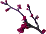 Petoos_Primavera_005b.png