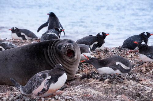 Антарктическая экспедиция - фототур в Антарктику