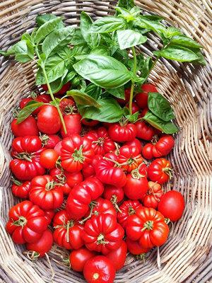 Вкусный томатный соус из свежих помидоров