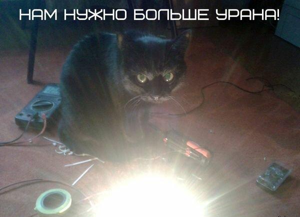 кот зло