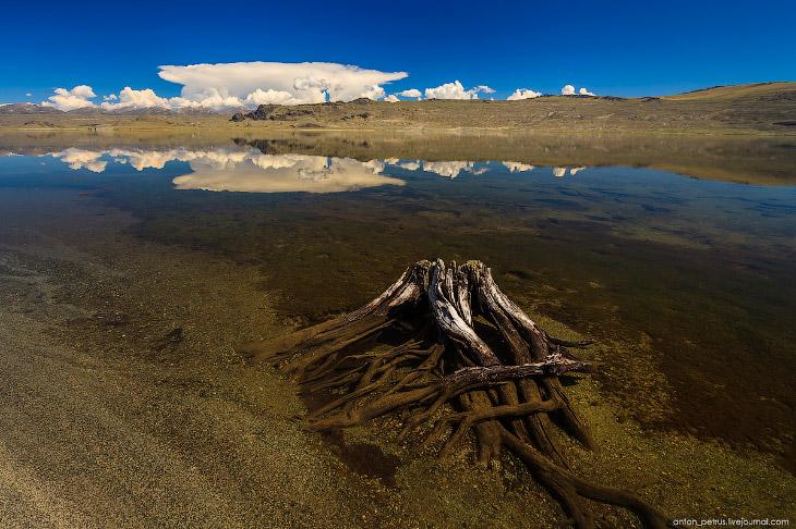2. Лиственницами!!! Настоящими, высокими, огромными деревьями!!! После пустыни и голых степей Монгол