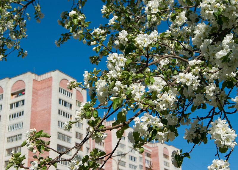 Город цветёт