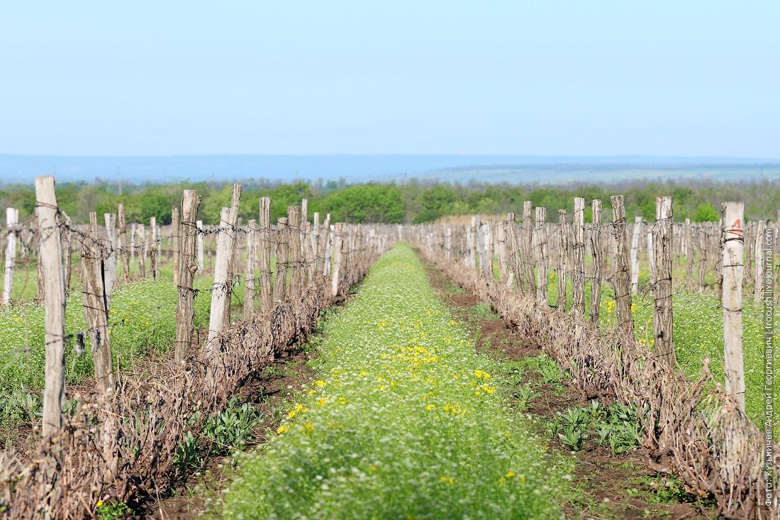 Поля, где произрастает виноградная лоза