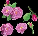 цветочки (5).png