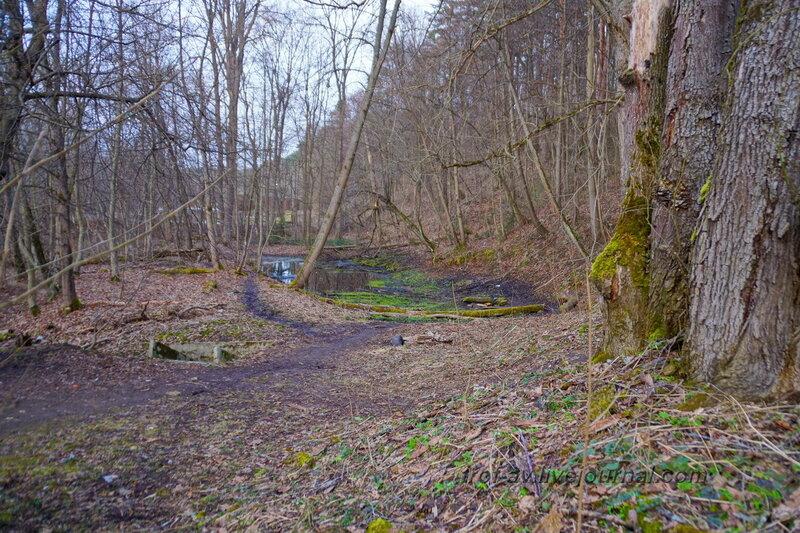 Лес у очистных