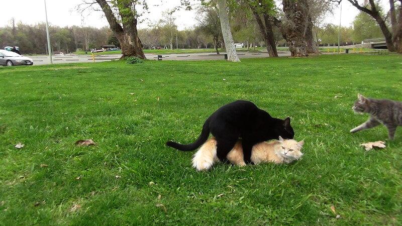 Бездомные кошки  / Cats