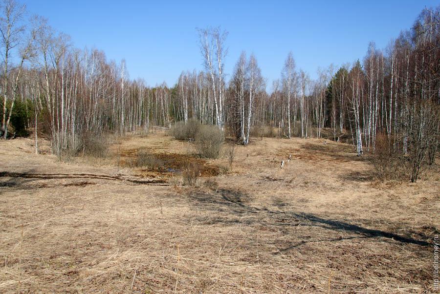 поляна у озера весной