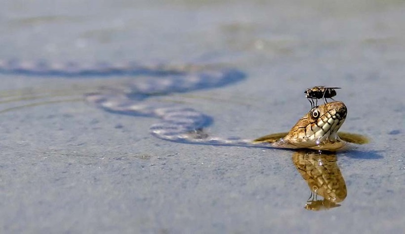 Пугающие фотографии змей 0 134abb 5f5d616c orig