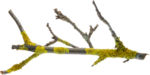 Holliewood_NatureJournal_Branch1.png