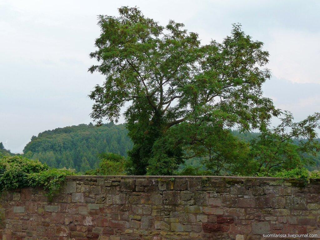 Вид из замка на горы Айфель.