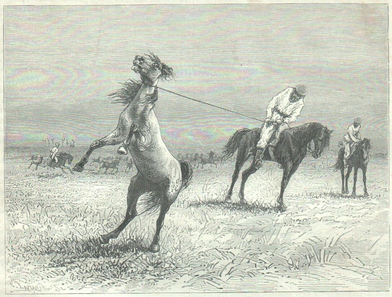 1878. Ловля диких лошадей арканом