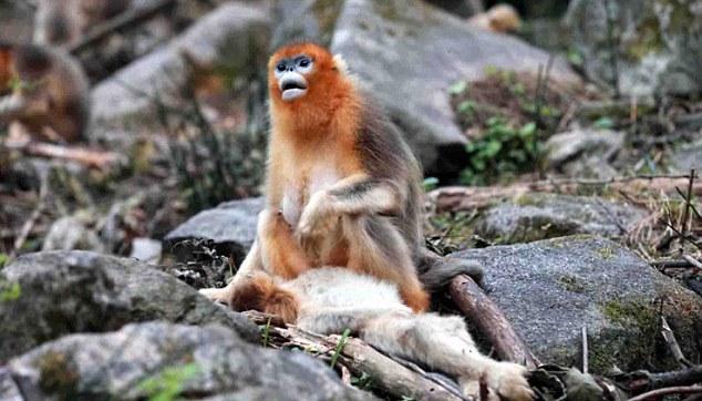 Горе матери: обезьянка не может поверить, что ее малыша больше нет