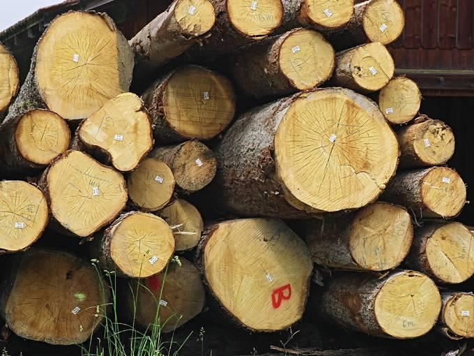 """Фракция ВО """"Свобода"""" в Волынском облсовете требует наложить мораторий на вырубку лесов"""