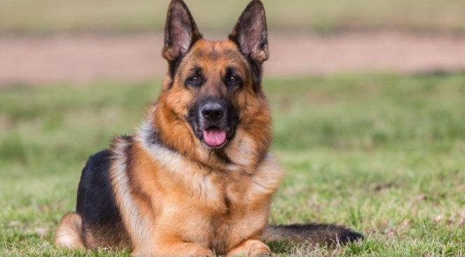 Собаки умеют диагностировать рак улюдей— Ученые