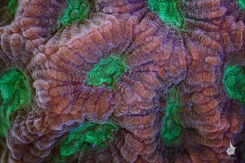 Фотографии красивых кораллов Большого Барьерного рифы у берегов Австралии