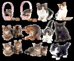Кошки не похожи на людей, кошки - это кошки...
