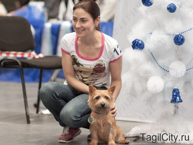 Выставка собак 10 декабря