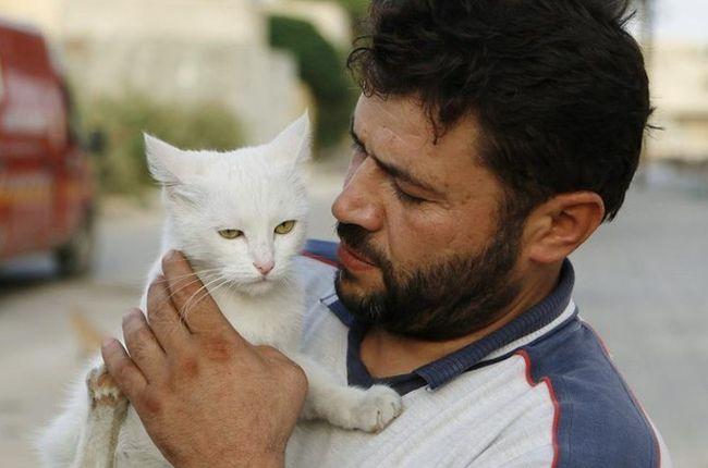 12 Дэвид Уильямс проект «Мужчины и коты».jpg