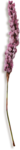 kimla_beloved_flower6_sh.png