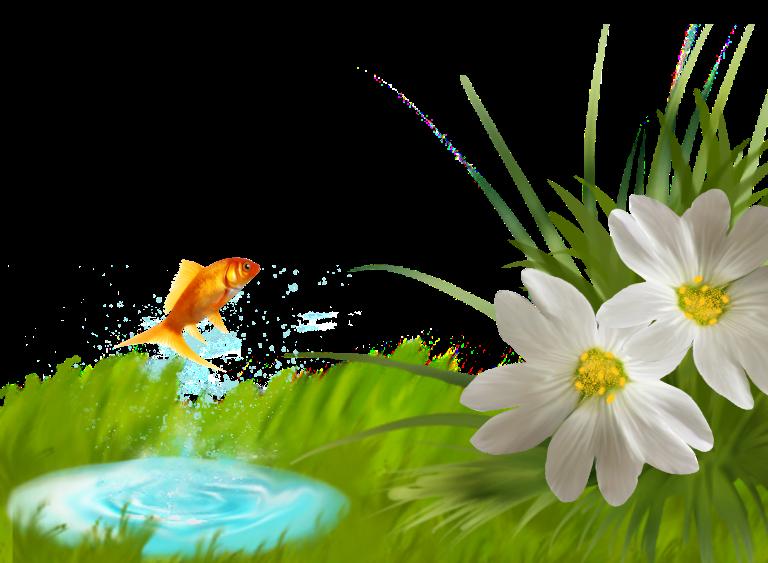 Фото в png летней травы и цветов