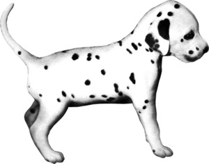 щенок долматинца