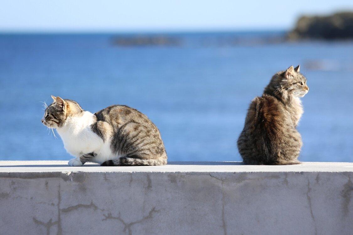 Коты острова Табарка