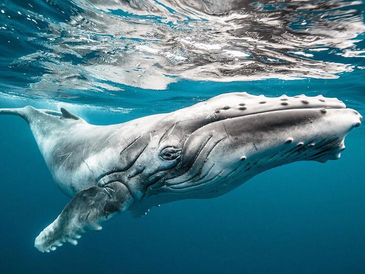 National Geographic: лучшие фотографии августа (19 фото)