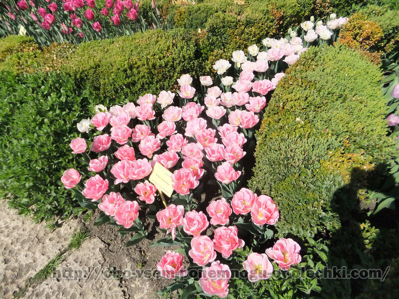 Парад тюльпанов. Балчик. 9 апреля 2014