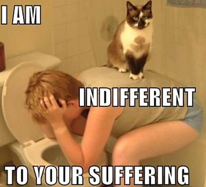 Кот, похмелье, унитаз, девушка, пьянка, рвота