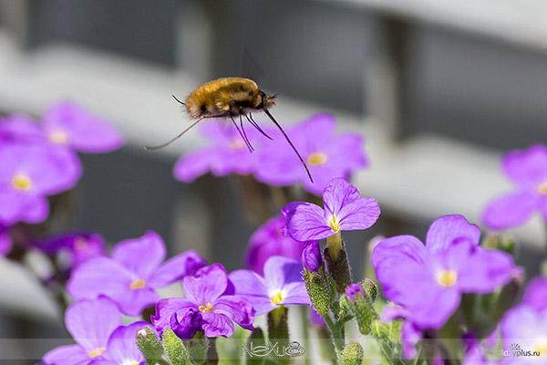 Соседи по саду-огороду 2013. На тему вокb50руг да около цветов. 50 фото