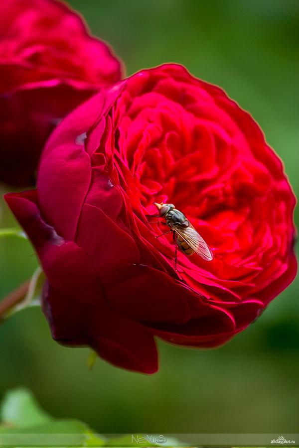 Соседи по саду-огороду 2013. На тему вокруг да около цветов. 50 фото