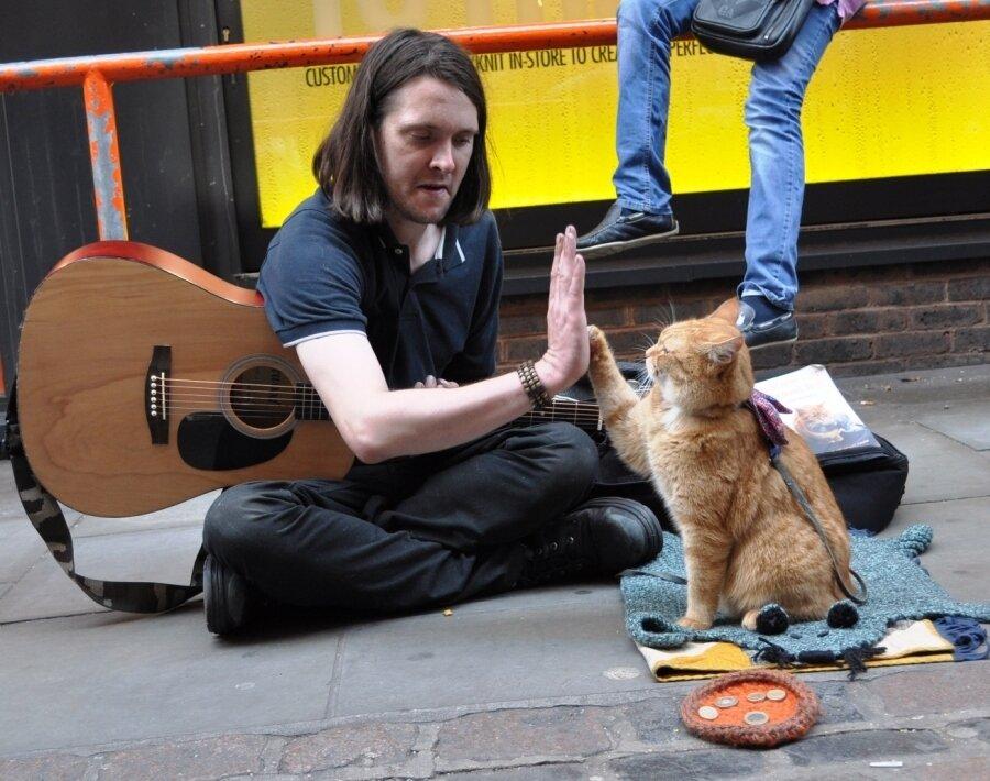 Мир глазами кота боба читать онлайн бесплатно