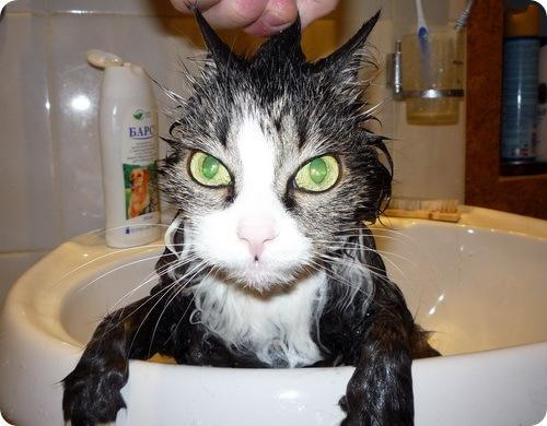 Мокрые кисы фото