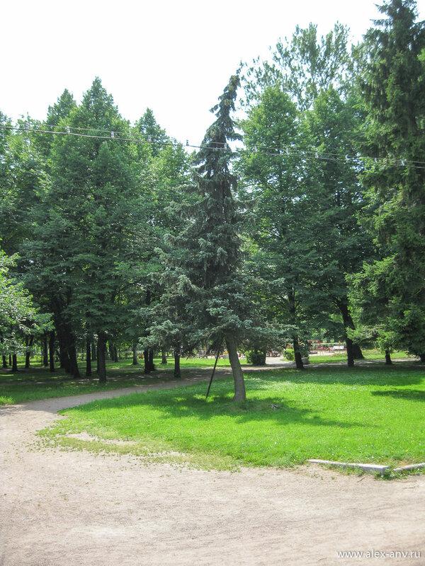Московский парк Победы. Не мог не сфотографировать скрюченную ёлку.