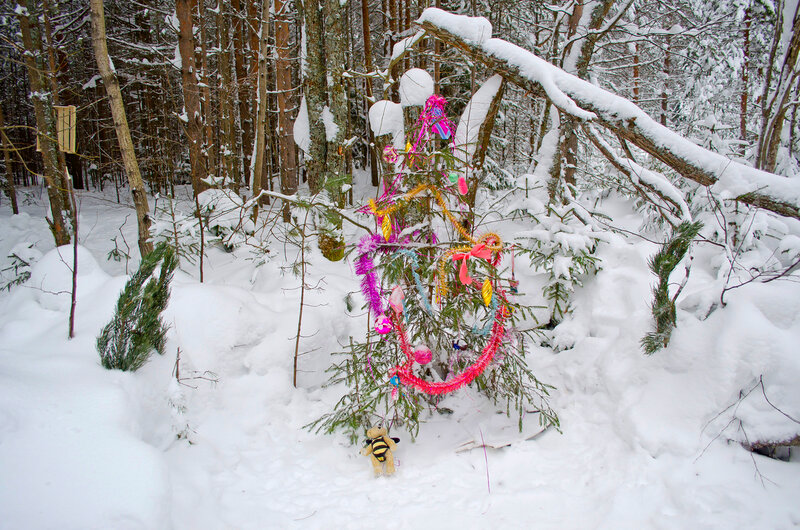 Рождество у елочки у лесу