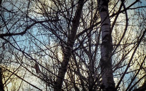 Белая береза под моим окном