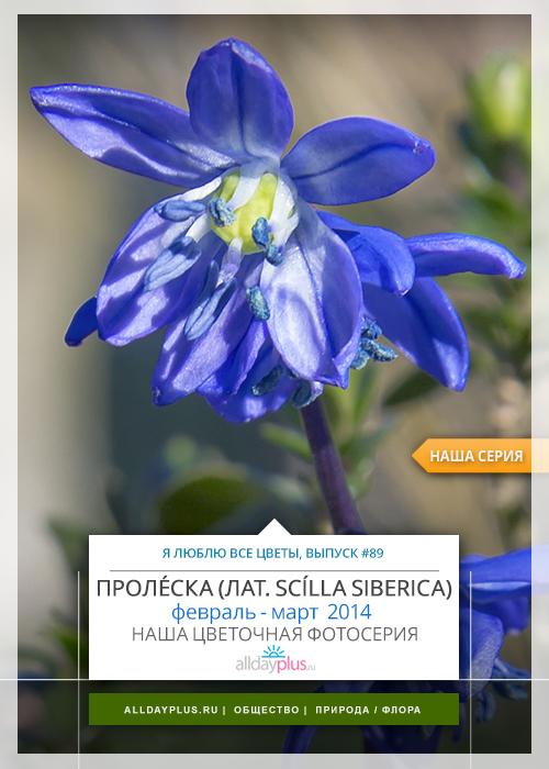 Я люблю все цветы, выпуск 89 | Пролéска - «голубой подснежник».