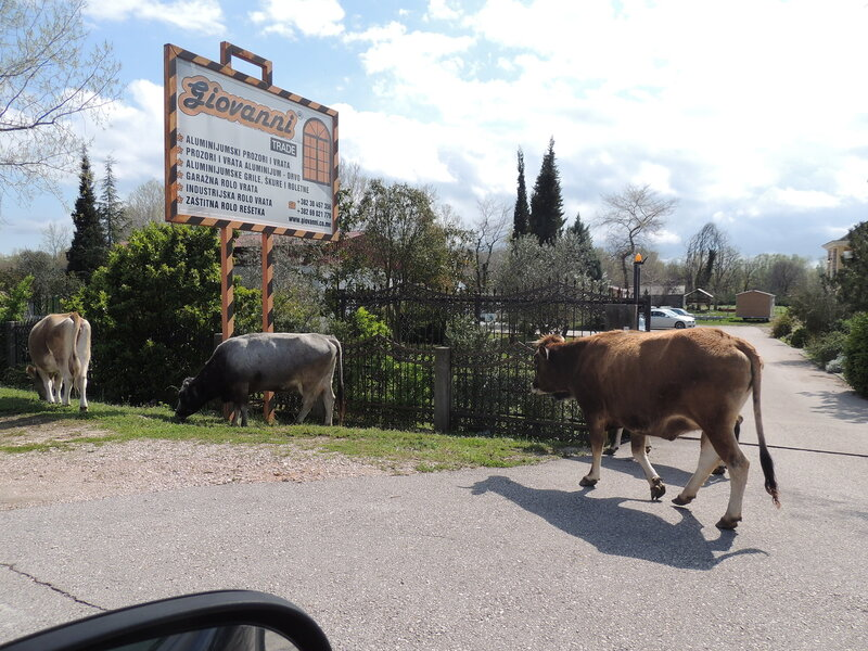 животные Черногории