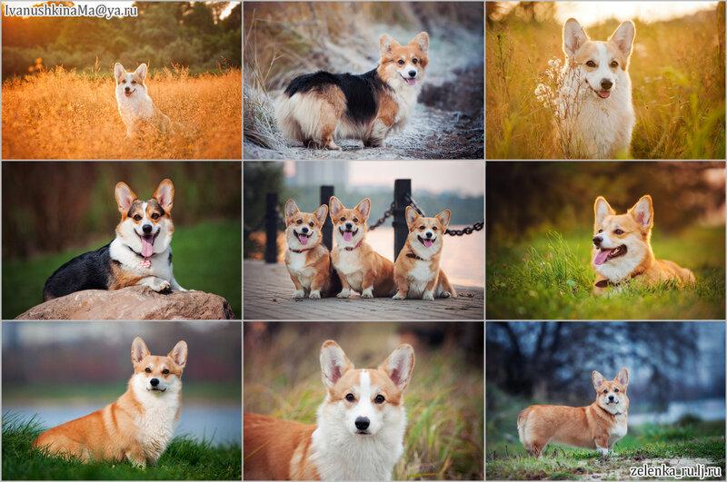 пофотографирую Ваших собак! 0_15beac_f6a385a0_XL