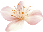 NLD Flower b.png