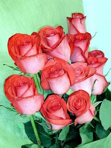 Букет красивых роз свежий открытка поздравление картинка